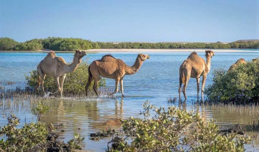 Flora und Fauna Ägyptens
